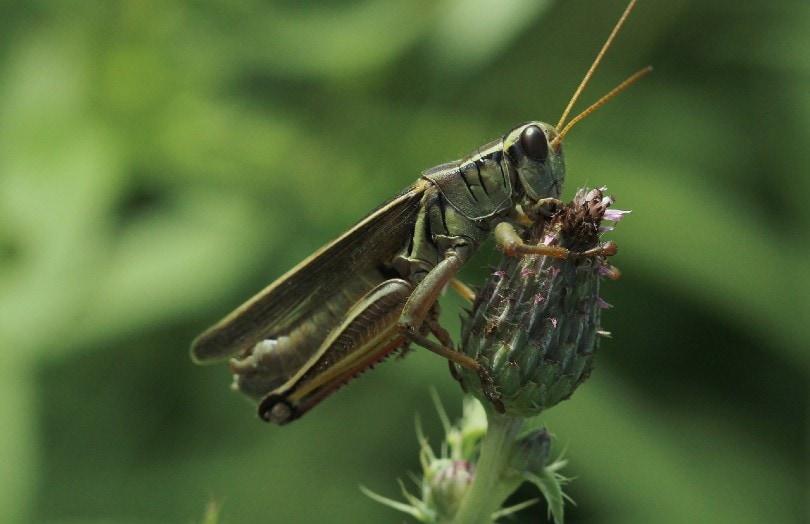 cricket on flower