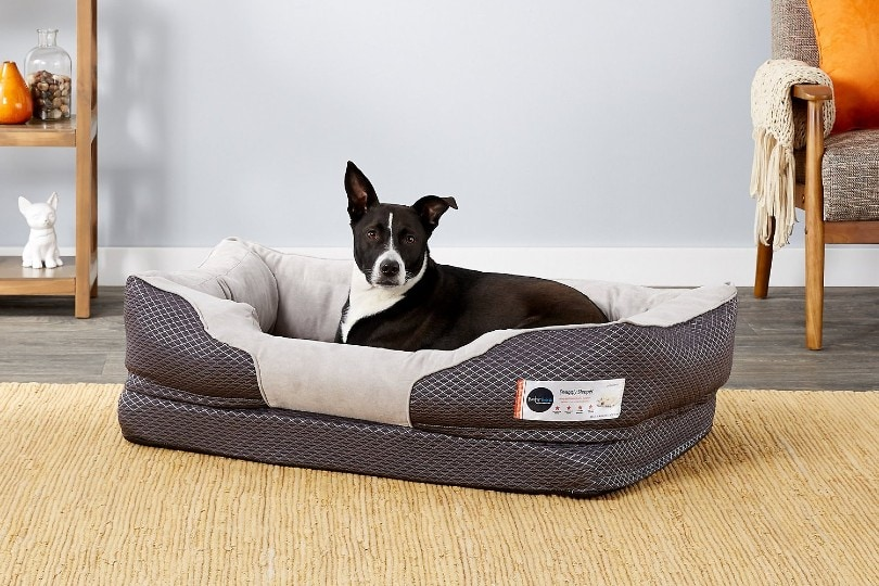 dog in a dog bed for hip dysplasia