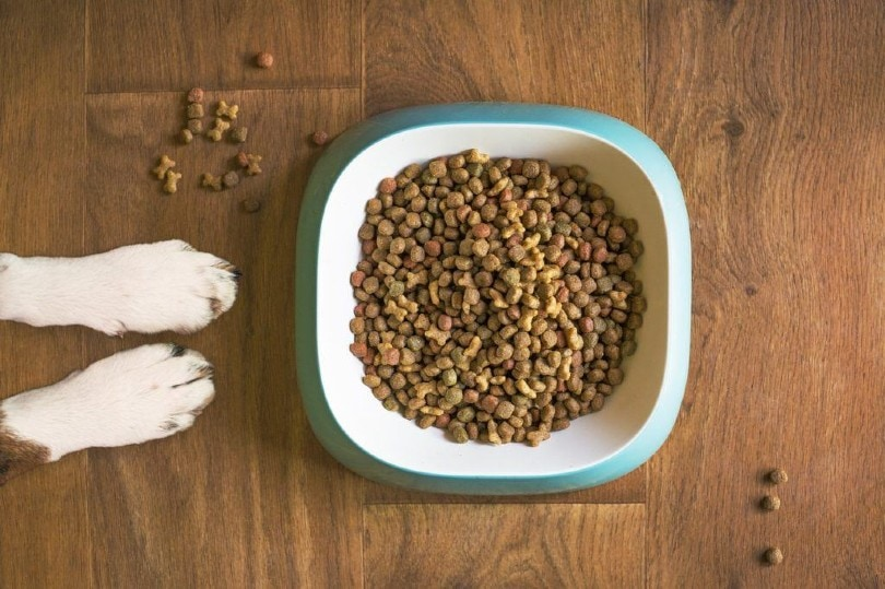 dog's paws beside his food