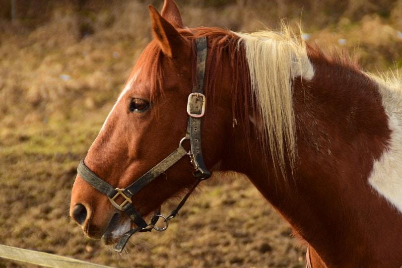 horse facing sideways