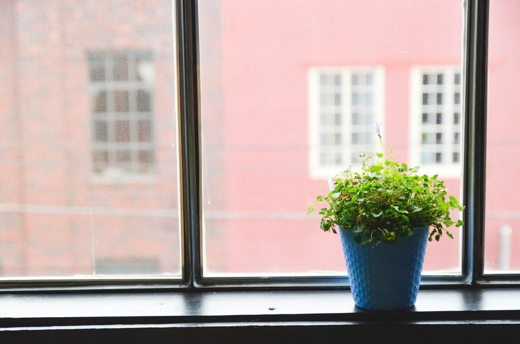 potted plant by the window