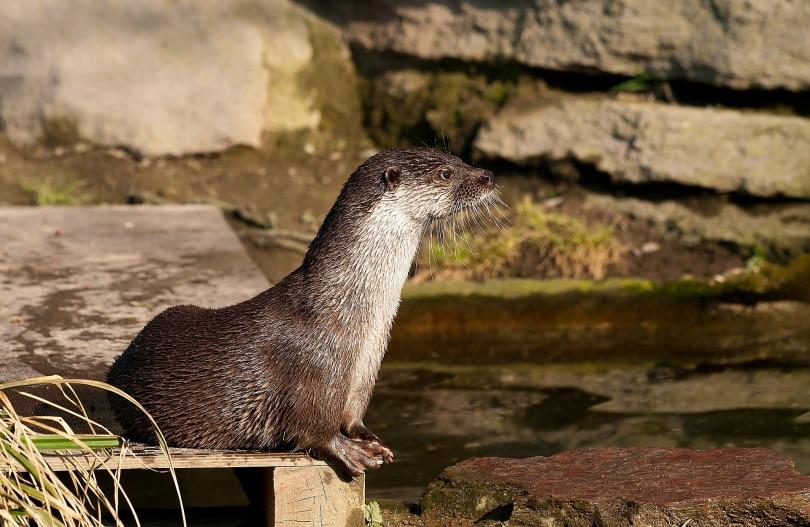 sea otters_miniformat65_Pixabay