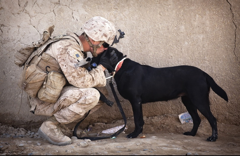 soldier kissing a black dog