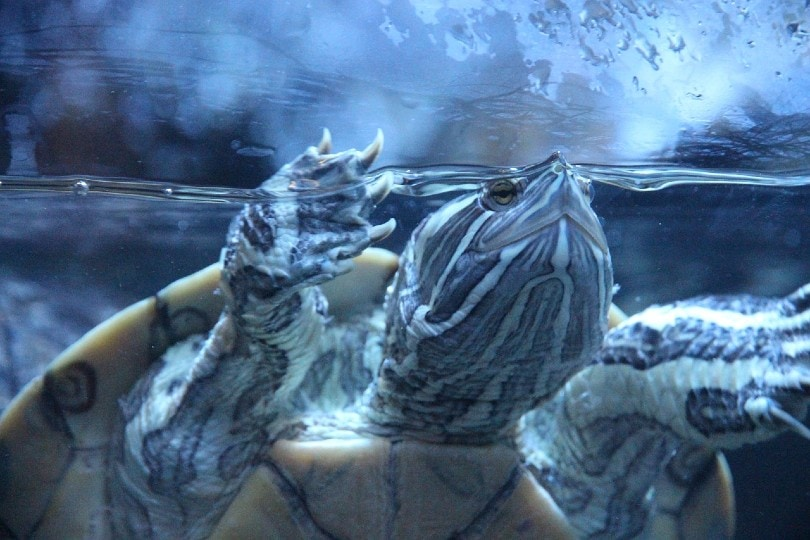 turtle inside aquarium