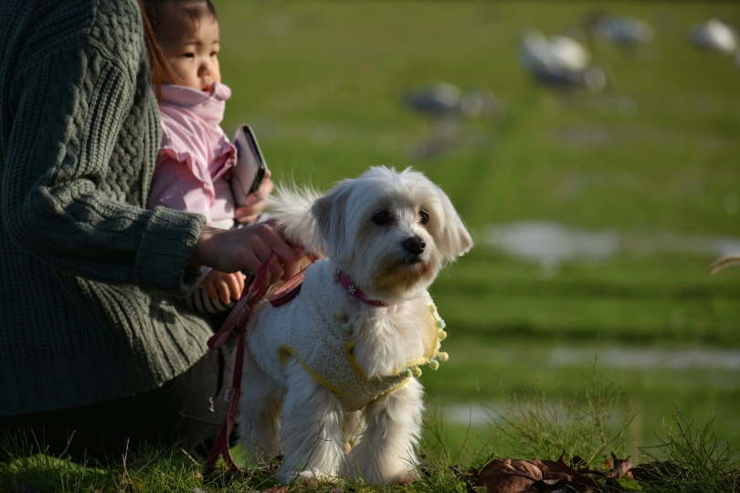 white dog in the park_