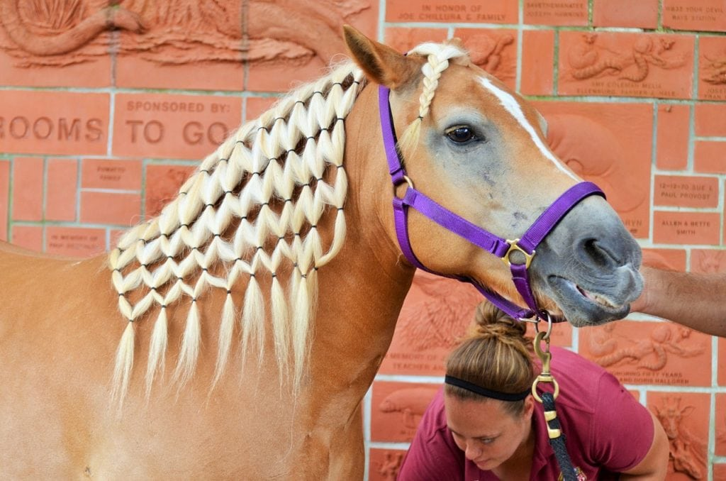 woman and a braided horse