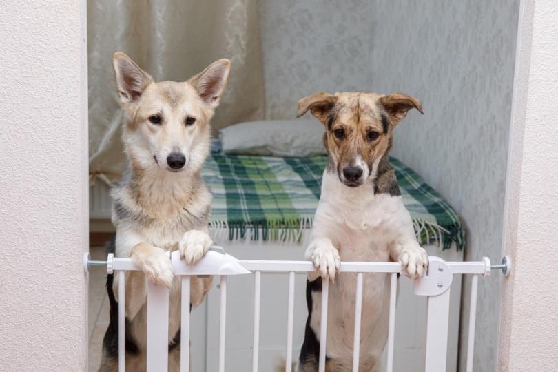 सुरक्षा रेल के पीछे 2 कुत्ते