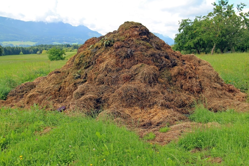 A pile of horse dung