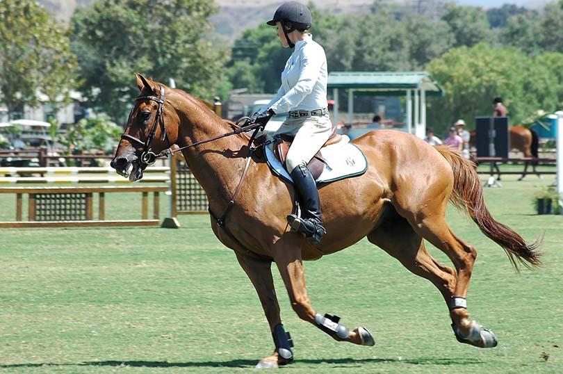 HorseBack Riding Sport