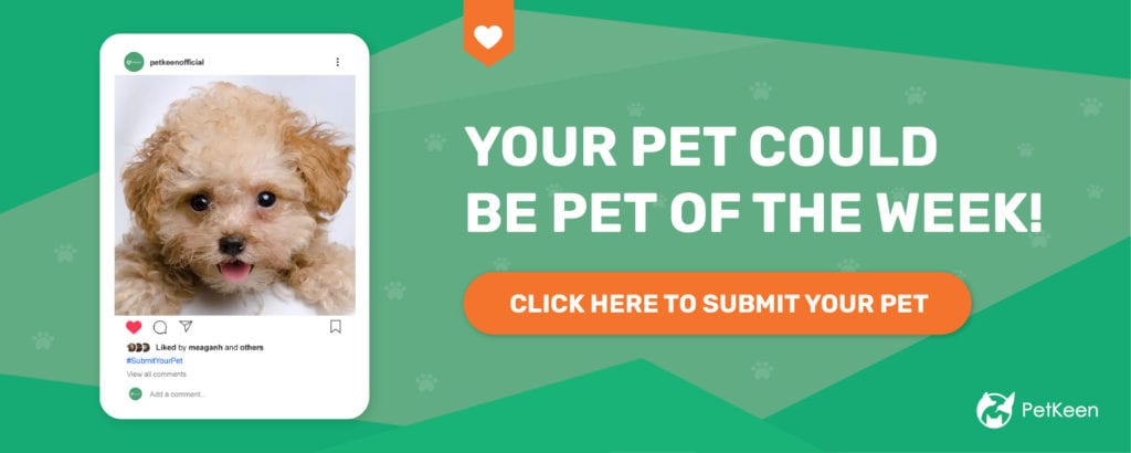 submit a pet pk dog