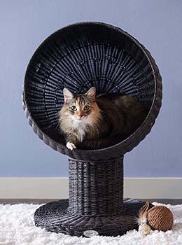 परिष्कृत बिल्ली के समान ऊंचा बिल्ली बिस्तर