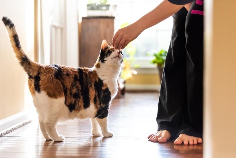 बिल्ली खाने का इलाज