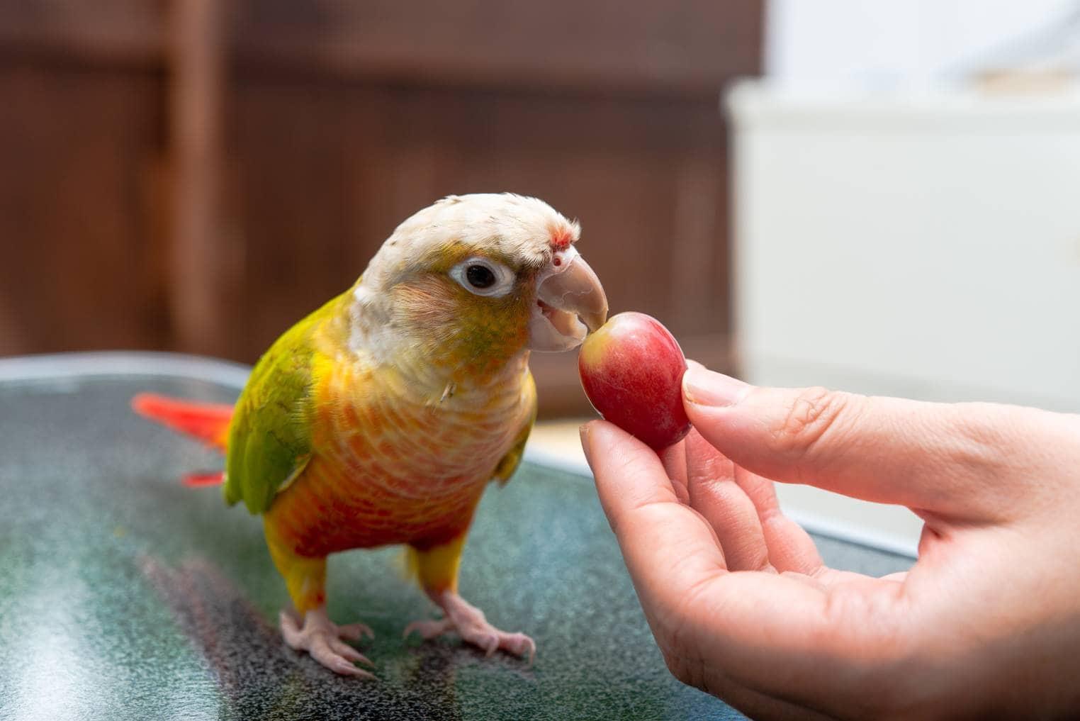 अंगूर खाओ