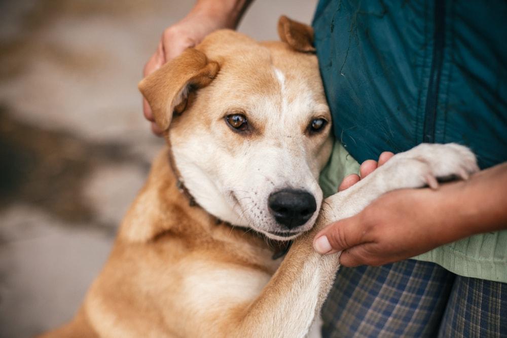 कुत्ते को गले लगाने वाला मालिक