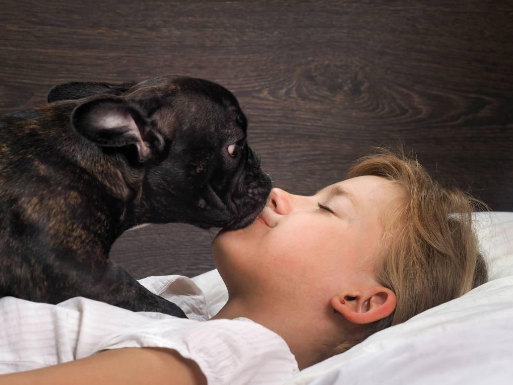 कुत्ता जाग रहा है इंसान