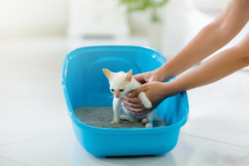 कूड़े के डिब्बे के अंदर बिल्ली