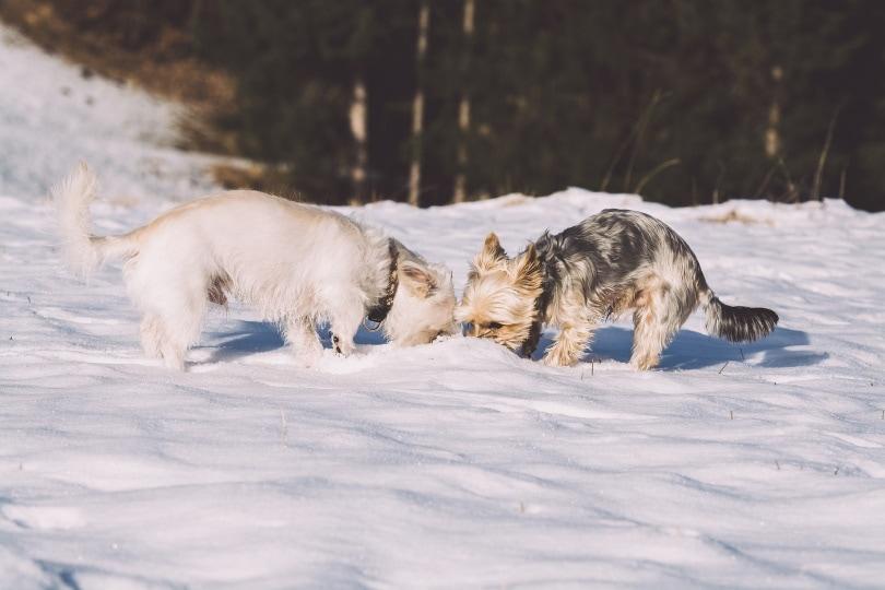 कुत्ता एक दूसरे को सूँघ रहा है